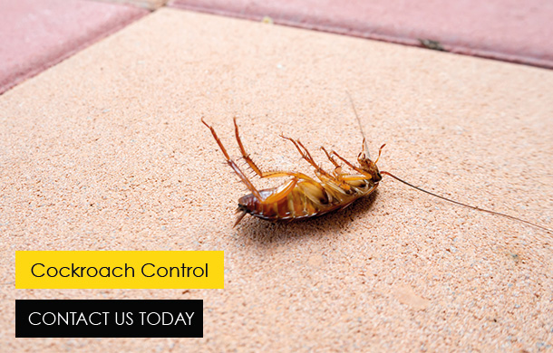 Buzz Bees Cockroach Control In Essex and London