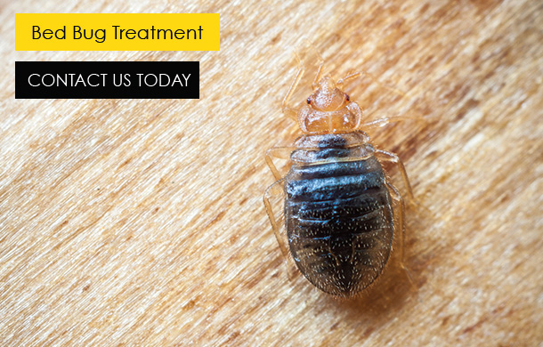 Buzz Bees Bed Bug Treatment In Essex and London