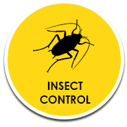 Buzz Bees Insect Control